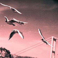 Seagulls in Istanbul - on the Bosphorus #istanbul  #turkey #turkiye #holidays #trips #instagrammer #instapic #2015 #seagulls #trip #vacations #holiday #wanderlust #istanbul #instapictures #travelbug #ilovetraveling #ilovetraveltheworld #lovetotravel #birds #bosphorus by samjil