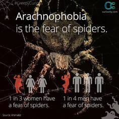 Why are so many people afraid of spiders? It may actually be evolutionary, but there are different theories: https://curiosity.com/video/why-are-we-scared-of-spiders-animalist/?utm_source=pinterest&utm_medium=social&utm_campaign=103014pin