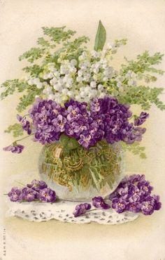 Violetes i muget: