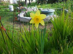 the name? Garden, Plants, House, Garten, Home, Lawn And Garden, Gardens, Plant, Gardening