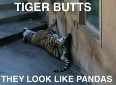 Lions tigers and pandas oh my