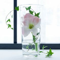 Round glass vase with a white amaryllis and ivy