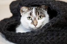 Katzenhöhle häkeln mit Textilgarn