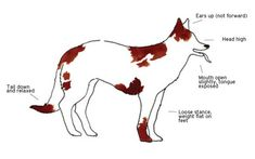 How to Read Your Dog's Body Language - PositiveMed