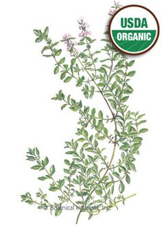 """Perennial. An invaluable seasoning in the kitchen, thyme, with its subtle, woodsy flavor complements a multitude of foods. Considered to be a staple herb of chefs, and one of the primary ingredients of """"bouquet garni"""". With very small leaves and delicate, edible flowers, this thyme makes a lovely 12"""" tall landscape plant; use as a low hedge around your herb or vegetable garden. An excellent container plant to enjoy indoors or out."""