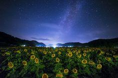 By Yoshiki Fujikawa