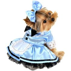 I pinned this Alice Dog Costume II from the Halloween Tricks & Treats event at Joss and Main!