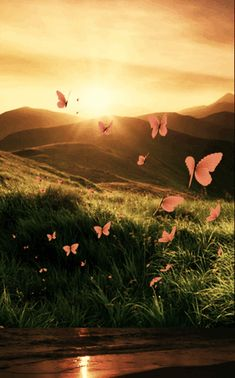 — It really doesn't matter how many people are. Beautiful Flowers Wallpapers, Beautiful Gif, Beautiful Butterflies, Beautiful Fantasy Art, Foto Gif, Gif Photo, Motion Wallpapers, Cute Wallpapers, Photo Background Images