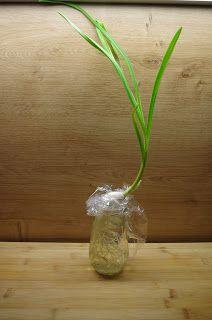 1000 images about exotische pflanzen tropische und. Black Bedroom Furniture Sets. Home Design Ideas