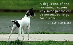 Round up of picture dog quotes.