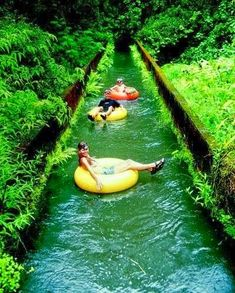 Beautiful Hawaii -Canal Tubing In Hawaii (I used to do this as a child.  It was sooooo fun).  <3k<3