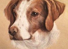 Pet portrait pets dog