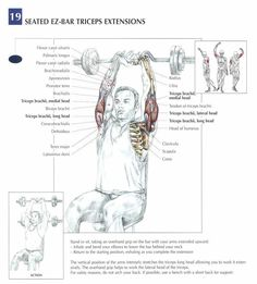 Seated EZ-bar tricep extensions