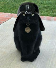 May the Force Be With You!!!  What a sleek dark beauty we have here.