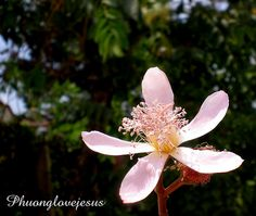 Davao, Philippines Travel, Tours, Flowers, Plants, Flora, Plant, Royal Icing Flowers, Flower