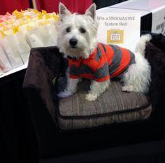 2013 Austin Pet Expo @Diane Pet Expos  Coverage of the 2012-2014 Amazing Pet Expos from their Online Ambassador - Preston from PrestonSpeaks.com.  #dog #westie #westhighlandwhiteterrier #amazingpetexpo