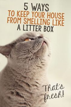 You're sitting on the couch, enjoying a movie and popcorn, when a rank smell starts to creep into your nostrils. Your cat strides past you, obviously feeling relieved; and you charge to the litter box to get the offending material out of the house as fast as possible. Even when the deposits aren't particularly smelly, odors build up over time, sometimes so gradually that you barely notice…but your guests can smell it!