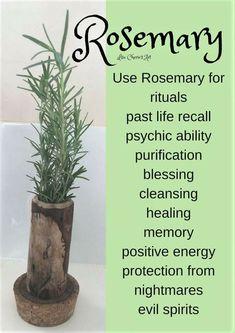Magic Herbs, Herbal Magic, Healing Herbs, Medicinal Herbs, Natural Medicine, Herbal Medicine, Natural Cures, Natural Healing, Green Witchcraft