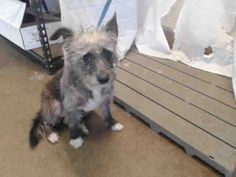 2yr old at ORANGE COUNTY ANIMAL SERVICES. Ocfl.net  kill date 05/24/2014
