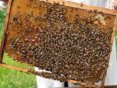 La UE aprobado los 27 programas de ayudas a la apicultura presentados por los Estado Miembros http://agrodiariohuelva.es/2016/06/24/la-comision-europea-aprueba-el-plan-nacional-apicola-para-el-trienio-2017-2019/