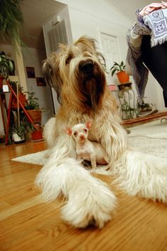 The Great Protector (I am talking about the Chi of course) ;D