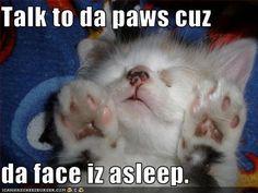 Talk to da paws cuz da face iz asleep.