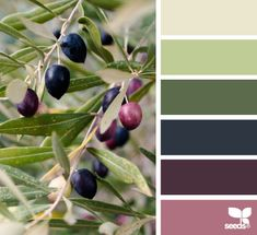 These olive hues would be a neat paint palette for a dining room or bedroom. Pantone Verde, Paleta Pantone, Design Seeds, Room Colors, House Colors, Colours, Colour Schemes, Color Combos, Palette Design