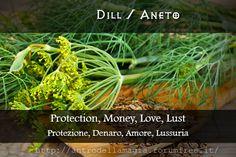 Magical Uses of Dill: Protection, Money, Love, Lust || Usi Magici dell'Aneto: Protezione, Denaro, Amore, Lussuria || L'antro della magia http://antrodellamagia.forumfree.it/?t=56596350