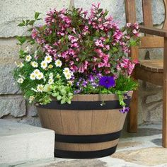 Plant a Whiskey Barrel Garden in Your Outdoor Space | Garden Club Easy Plants To Grow, Big Plants, Exotic Plants, Potted Plants, Growing Flowers, Planting Flowers, Potted Flowers, Top Flowers, Happy Flowers