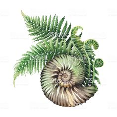 natur illustration Watercolor prehistoric seashell with the fern branches growing out from it. Hand painted natural illustration isolated on white background Detailliertes Tattoo, Tattoo Drawings, Snail Tattoo, Art Aquarelle, Watercolor Art, Botanical Illustration, Botanical Prints, Mutter Erde Tattoo, Tatoo Nature