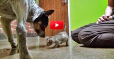 Warning: Only Watch This Video If You Have Some Tissues Nearby!   The Animal Rescue Site Blog