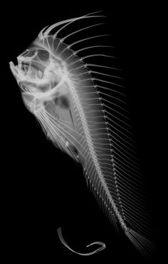 x-ray fishy.....oh cousin Alex!  Check this dude out!
