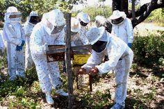 apicultura do pantanal/ms - Pesquisa Google