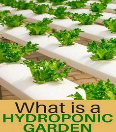 Aquaponics DIY Backyard - Comparing Critical Criteria For Easy Aquaponics System - Wardly Hydroponic Farming, Hydroponic Growing, Hydroponics System, Diy Hydroponics, Backyard Aquaponics, Aquaponics Plants, Aquaponics Kit, Greenhouse Plants, Commercial Aquaponics