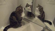 Cat & Mirror