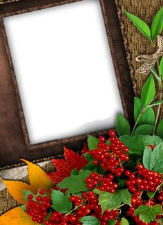 Nice Fall PNG Photo Frame
