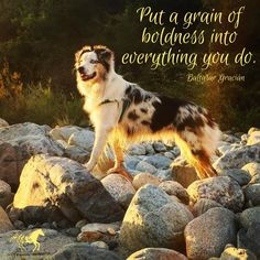 """""""Put a grain of boldness into everything we do."""" ~ Wind Horse Sanctuary offers the opportunity to connect your mind, body and spirit with the experience of Equine Facilitated Learning (EFL). Learn more at our website: www.windhorsesanctuary.com"""