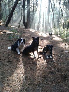 Mis perros son ese rayo de luz que me acompaña día a día.