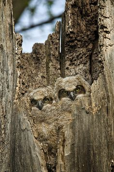 Baby Owls Could carve hidden owls in a tree stump for yard decor
