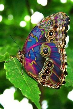 Butterfly. My What a Beautiful Day