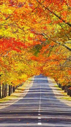: Mount Macedon, Melbourne, State of Victoria, Australia