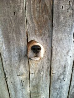 17 dogs that are very well want to say hello