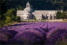 'Abbaye de Senanque' http://fc-foto.de/25275321