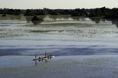 Team building photographic safari in the Okavango Delta in Botswana. image: Duma Tau
