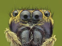 172 отметок «Нравится», 3 комментариев — Trần Thế Ngọc (@thengoctran) в Instagram: «Black eyes minion  #macro #macroworld_tr #majestic_macro #insects #insects_of_our_world…»