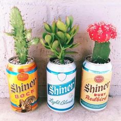 Beer can plants