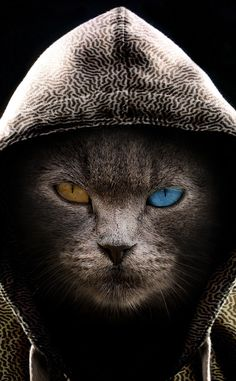 Cat in hood, colored eyes, wallpaper Iphone Wallpaper Cat, Eyes Wallpaper, Cartoon Wallpaper Hd, Animal Wallpaper, Cellphone Wallpaper, Iphone Wallpapers, Baby Animals, Cute Animals, Photo Chat