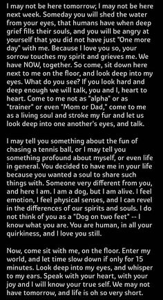 What your dog thinks when he looks at you part 2
