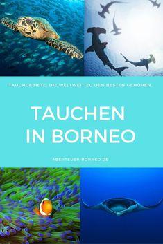 Borneo, Beautiful Islands, Water Sports, Diving, Adventure, World, Fun, Interesting Facts, Island