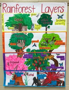 This Thematic Unit could help me go through the vocabulary with the students and help them see a more expanded version of the rainforest. Rainforest Preschool, Rainforest Classroom, Rainforest Crafts, Rainforest Project, Rainforest Habitat, Rainforest Animals, Amazon Rainforest, Preschool Jungle, Kindergarten Lesson Plans